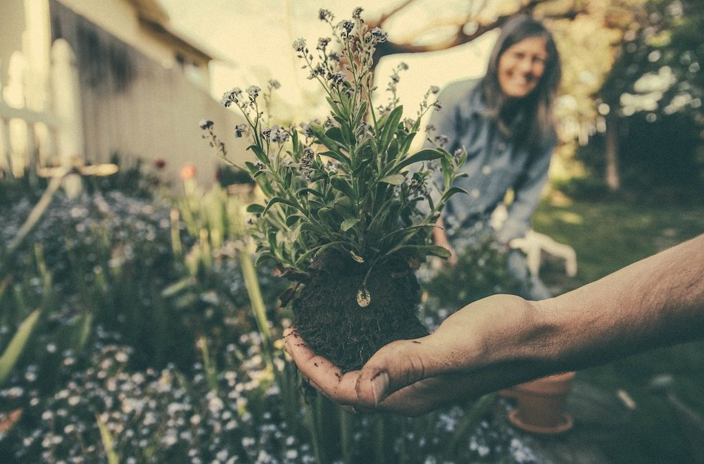 The Green Thumb: Getting into Gardening